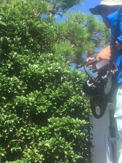 生垣植栽の剪定 便利屋代行サービスの剪定とは?