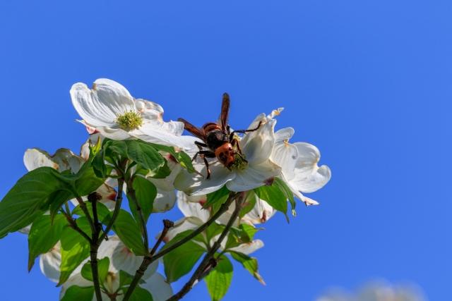 蜂の巣調査 アシナガバチ駆除 報告