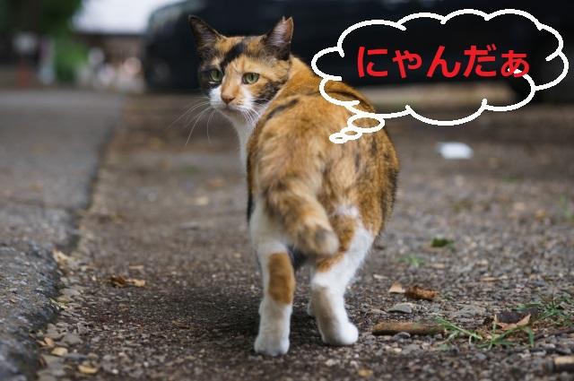 ノラ猫、被害どうにかして!