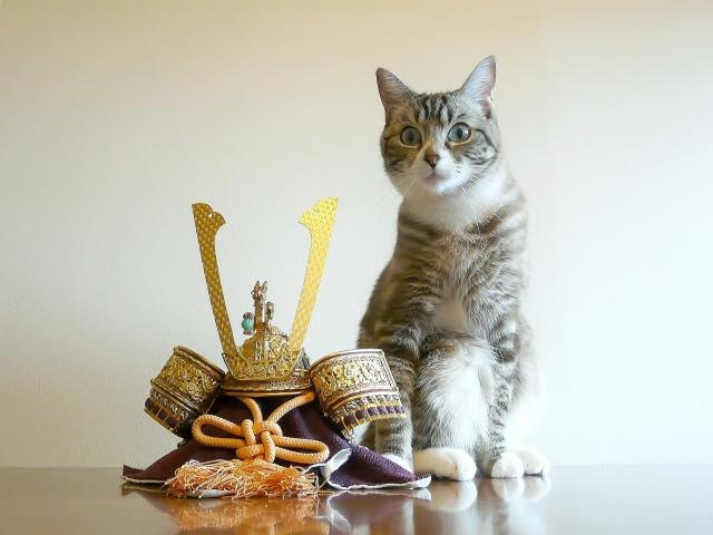 家事代行スタッフが、教えるネコの手入れ方法