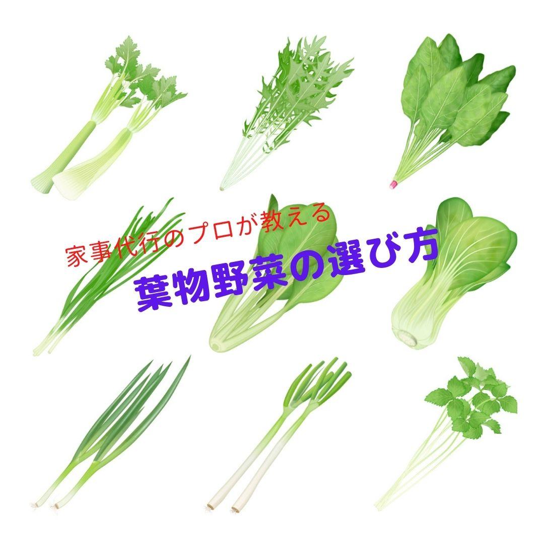 家事代行のプロが教える葉物野菜の選び方